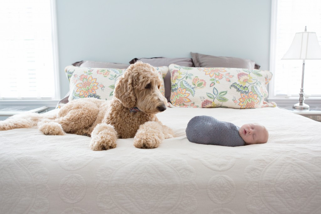 Best newborn pictures with dog