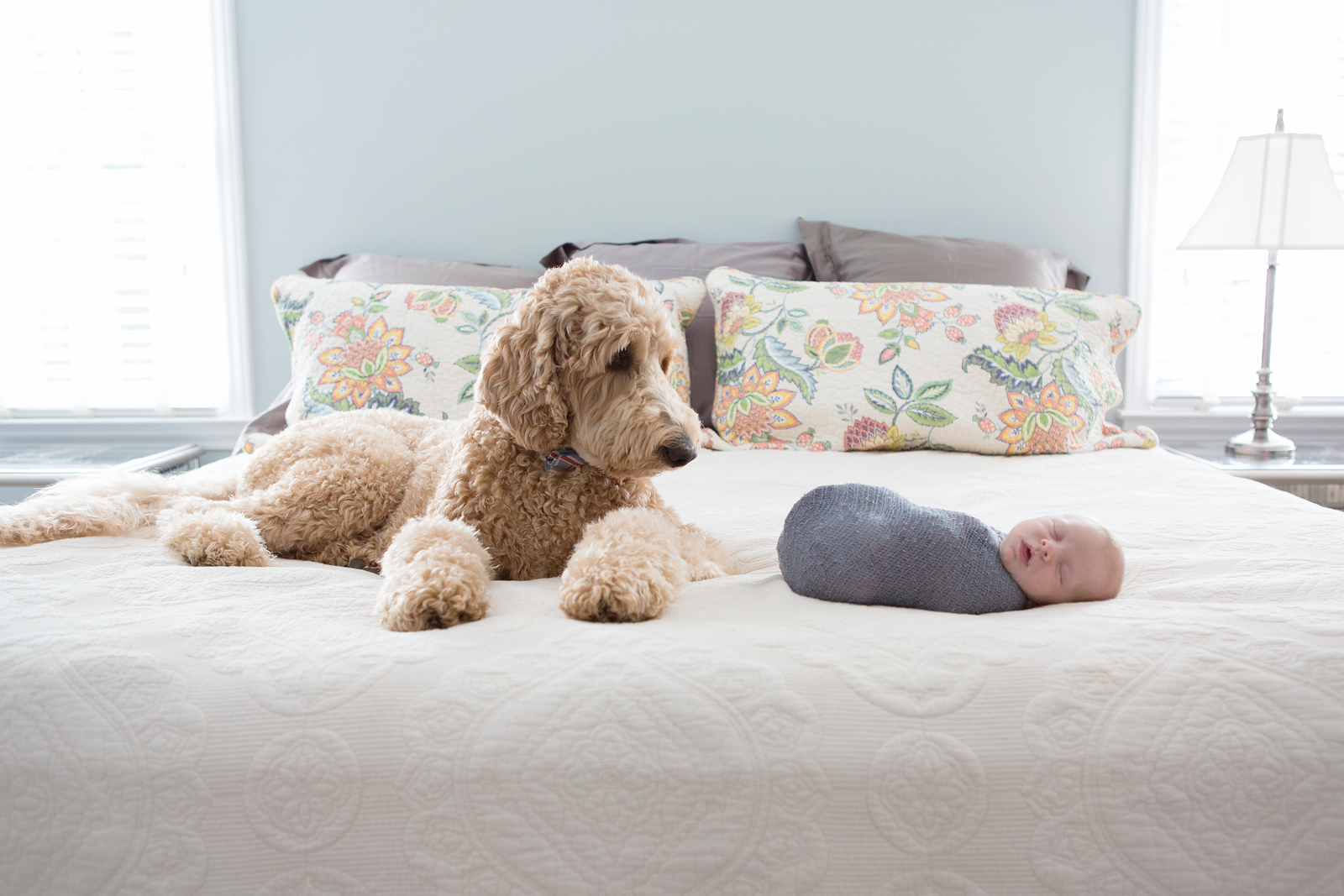 Baby with 2 dogs best newborn pictures with dog