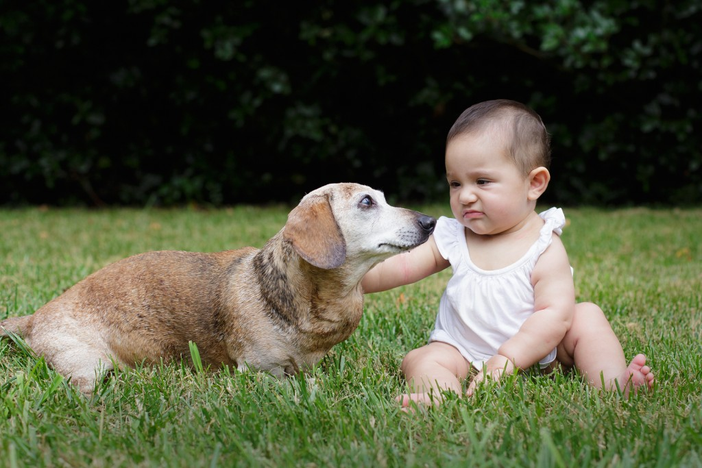 dog angry with baby