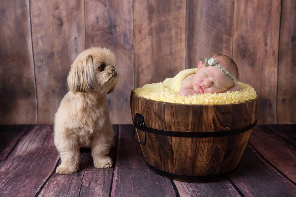 Dog overlooking newborn baby